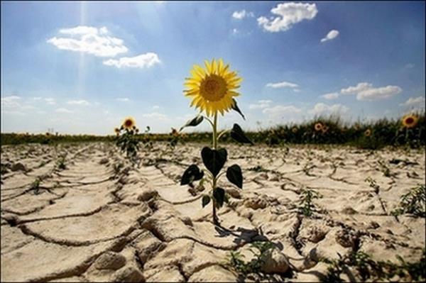 засуха 2018