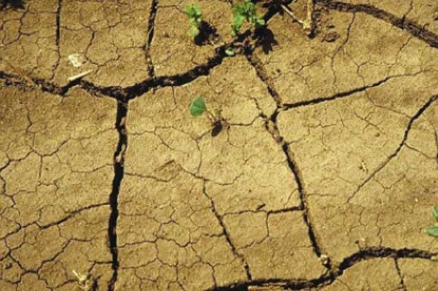 жара и засуха 2018 года